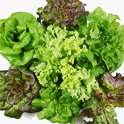 Lettuce Assorted