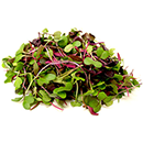 Micro Greens Rainbow Mix Organic